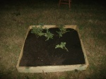 finished watermelon bed....